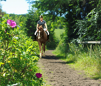 Low Meadows Equestrian Centre Riding School and Stables